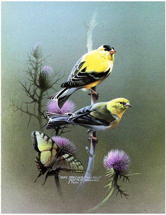 http://www.jesuspaintings.com/birds_paintings/goldfinch%27s-more-precious-than-gold.jpg