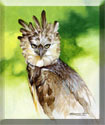harpy eagle painting