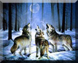 animal paintings,Wildlife  Paintings ~ Wildlife Art ~ Animal Paintings & Animal Artwork~ Paintings of  Wildlife ~ Smoky Mountains Tennessee wolves ,tigers, deer,elk, spencer williams, oil paintings, wildlife paintings