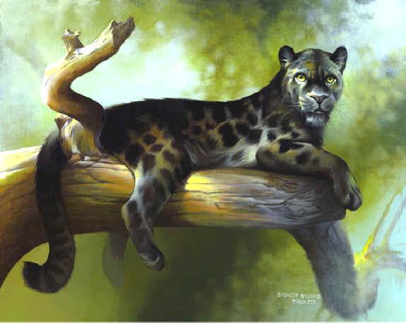 black artwork paintings. Wildlife Paintings, wildlife