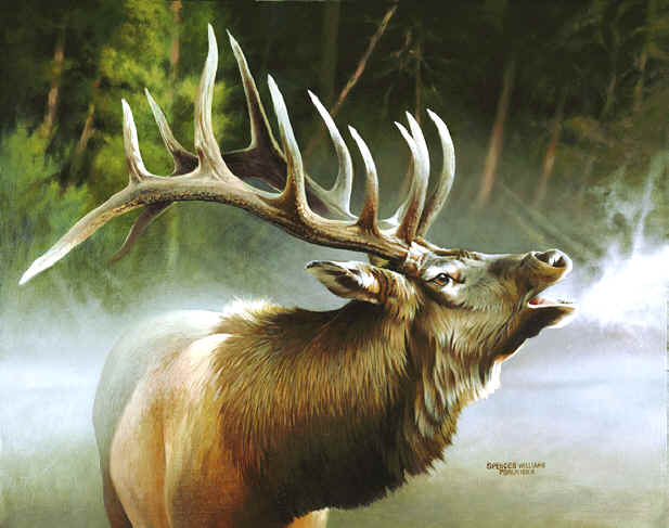 wildlife oil paintings, oil paintings of wildlife