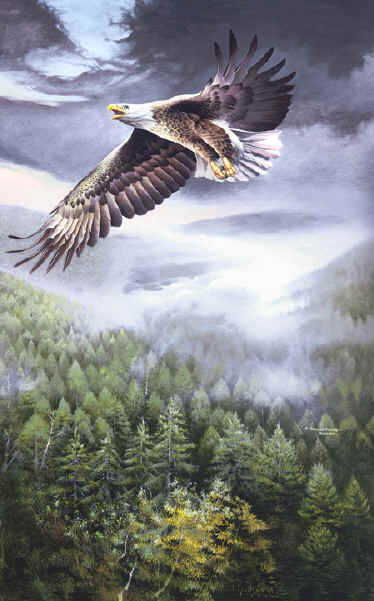 Bird Paintings, Wildlife Paintings ~ Wildlife Art ~ Animal Paintings & Animal Artwork~ Paintings of Wildlife ~ Smoky Mountains Tennessee