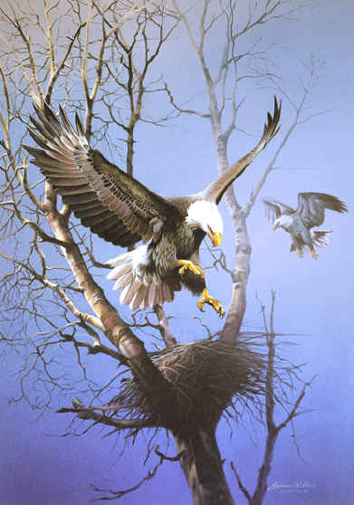 eagle paintings, paintings of eagles, eagle artwork,eagles